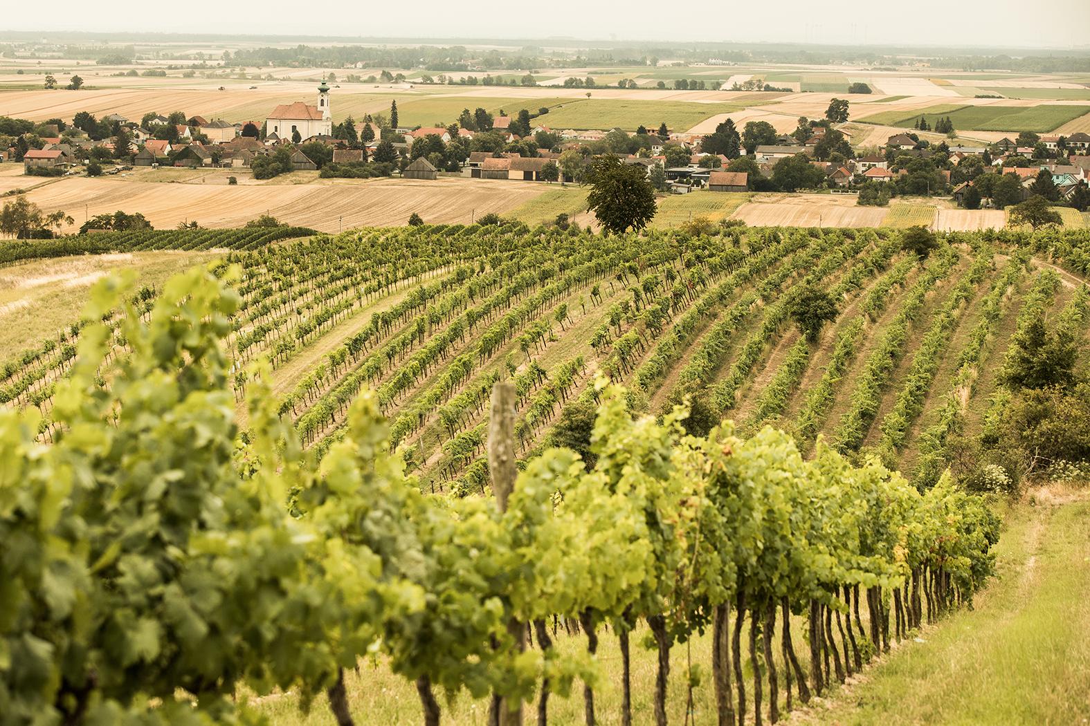 Weingarten im Weinviertel
