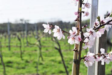 Frühling im Weinviertel