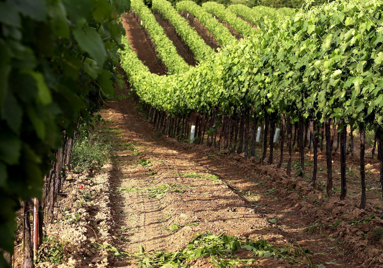 Wein im Weinviertel