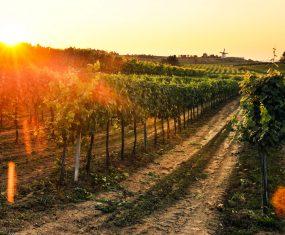 Das Wetter im Jahr 2017 im Weinviertel hielt einige Herausforderungen parat