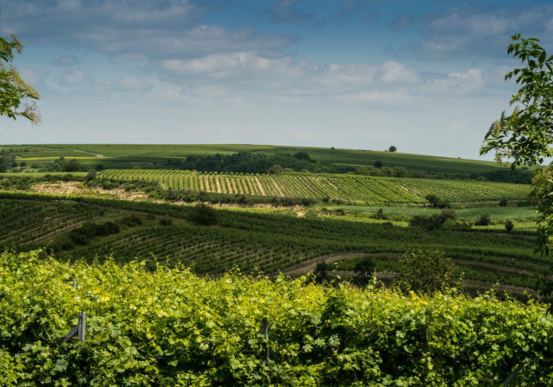 Das Weinviertel